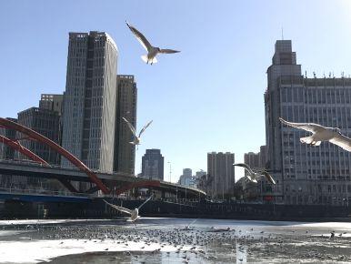 Beautiful tourist place 3, Tianjin